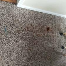 Carpet cleaning (2)
