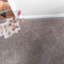 Carpet cleaning (5)